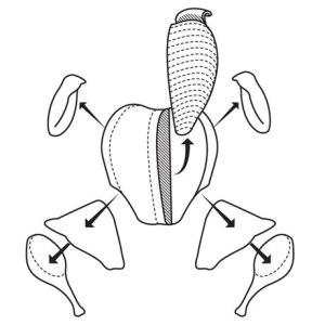 carve-a-turkey-0509-lg